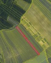 (Prodej, orná půda, 6116 m2, Klobouky u Brna), foto 2/4