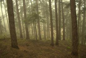 (Prodej, les, 11794 m2, Strašín), foto 4/5
