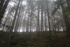 Prodej, les, 11794 m2, Strašín