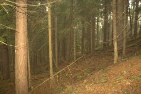 (Prodej, les, 11794 m2, Strašín), foto 3/5