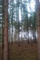 LES (Prodej, les, 20151 m2, Třebíč), foto 4/5
