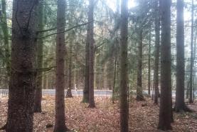 Prodej, les, 20151 m2, Třebíč