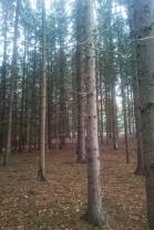LES (Prodej, les, 20151 m2, Třebíč), foto 3/5