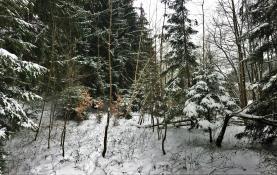 Prodej, Les, Horní Lomná , 800 m2