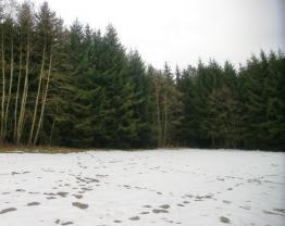Prodej, les, Lomnice nad Popelkou - Ploužnice