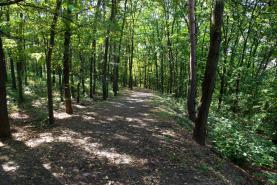 Prodej, les, 32223 m2, Sedliště