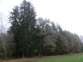 Prodej, les, 56 999 m2, Velešín - Chodeč