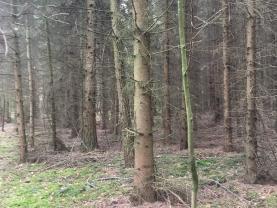 (Prodej, les, 8963 m2, Konárovice), foto 3/3
