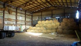 Prodej, zemědělský objekt, 1178 m2, Ctiboř u Tachova