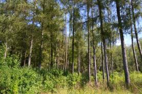 Prodej, les, Černilov