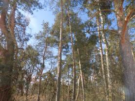 (Prodej, les, 555 m2, Klučenice), foto 3/19