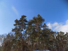 (Prodej, les, 555 m2, Klučenice), foto 4/19