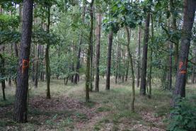 Prodej, les, Přelouč