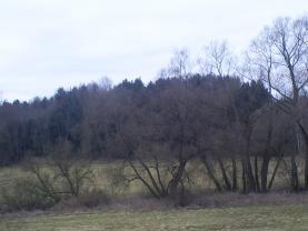 Prodej, les, 4388 m2, Lužná