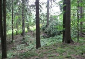 Prodej, les, 7121 m2, Železný Brod, Střevelná