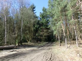 Prodej, lesní porost s pozemkem, 3524 m2, Neveklov