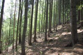 Prodej, les, 16230 m2, Habartice, Jindřichov