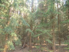 (Prodej, lesní pozemek, 7902 m2, Křenovice), foto 2/4