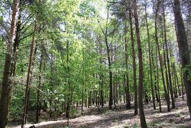 Prodej, les, 20213 m2, Jankovice u Přelouče