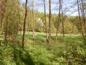 Les (Prodej, les, 4628 m2, Hrubá Skála), foto 2/14