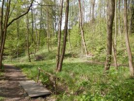 Prodej, les, 4628 m2, Hrubá Skála