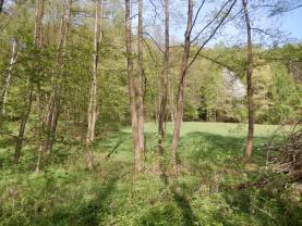 Les (Prodej, les, 4628 m2, Hrubá Skála), foto 3/14