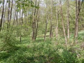 Les (Prodej, les, 4628 m2, Hrubá Skála), foto 4/14