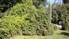 z etlefonu 045 (Prodej, zahrada, 369 m2, Karvina - Ráj), foto 2/7
