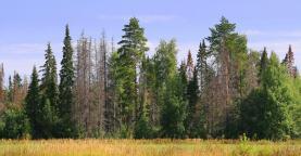 Prodej, les, 31726 m2, Písečná
