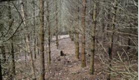 Prodej, les, 31949 m2, Sušno - Kropáčova Vrutice