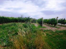 Prodej, vinice, 3285 m2, Lednice