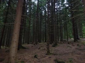 (Prodej, les, 48189 m2, Horní Bečva), foto 3/9