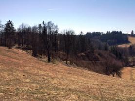 L1 (Prodej, les, 23760 m2, Kounov u Dobrušky), foto 2/10