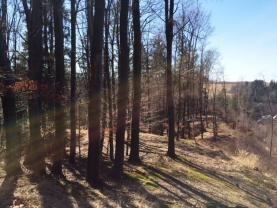 L7 (Prodej, les, 23760 m2, Kounov u Dobrušky), foto 3/10
