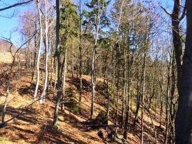 Prodej, les, 23760 m2, Kounov u Dobrušky