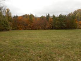 Prodej, les, Krásná, 50467 m2