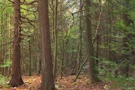 Prodej, les, Velké Meziříčí
