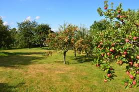 Prodej, zahrada 2125 m2, Supíkovice okr. Jeseník