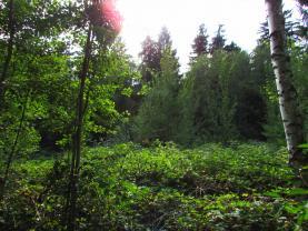 Prodej, lesní pozemek, Malinová u Rakovníka