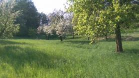 Pronájem, ovocný sad, Podhořany u Nových Hradů
