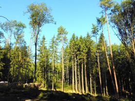 Prodej, les, 37833 m2, Skočice - Lidmovice