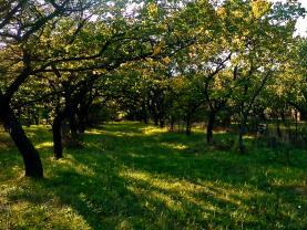 Prodej, ovocný sad 3635 m2, Židlochovice