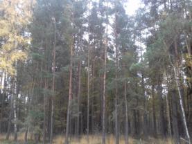 Prodej, les, 21 390 m2, k.ú. Spolí u Ledenic