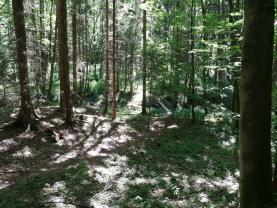Prodej, les, 4262 m2, Konojedy