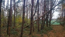 Prodej, lesní pozemek, 5884 m2, Vinařice u Týnce nad Labem