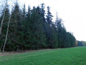 Prodej, les, 3564 m2, Raná