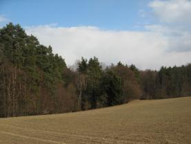 Prodej, les,10879 m2, Dříteč