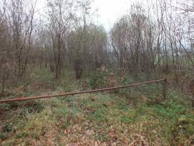 (Prodej, louka, 1746 m2, Mikulovice u Jeseníka), foto 3/3