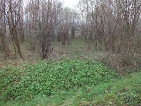 (Prodej, louka, 1746 m2, Mikulovice u Jeseníka), foto 2/3