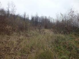 Prodej, lesní pozemek,20392m2